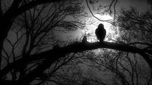 scary creepy or sitting on tree branch during a