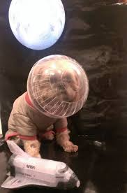 yorkie halloween costumes best 25 pet halloween costumes ideas on pinterest puppy