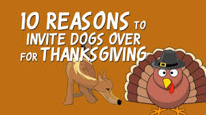 10 reasons to invite dogs for thanksgiving