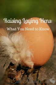 Backyard Laying Chickens by 17 Best Images About Homestead Inspiration On Pinterest Crop