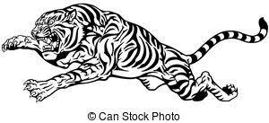 tiger black white aggressive tiger black and white clip