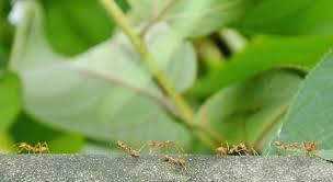 de fourmis dans la cuisine comment se debarrasser des fourmis dans une cuisine comment se
