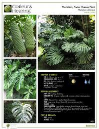 shrubs cotleur u0026 hearing landscape companycotleur u0026 hearing