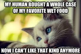 Wet Cat Meme - 30 hilarious struggles only cat owners will understand simon howes
