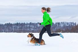 australian shepherd jogging the do u0027s and don u0027ts of running with your dog wellness us news
