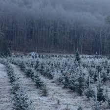 maple hollow christmas tree farm a community tradition since