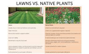 native plants landscaping sustainable landscaping in the suburbs