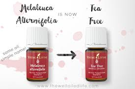 stronger than tea tree essential uses the well