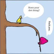 Meme Diet - bird needs a diet meme by araffl01 memedroid