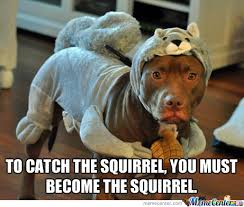 Dead Squirrel Meme - squirrel memes best collection of funny squirrel pictures