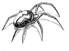black spider tattoo sketch photo 2 real photo pictures images