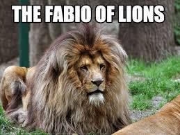 Lion Meme - 13 amazingly hilarious lion memes i can has cheezburger