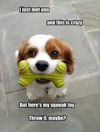 Puppy Memes - top 29 puppy memes life quotes humor