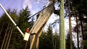 we re in your community looking for trees that might cause outages