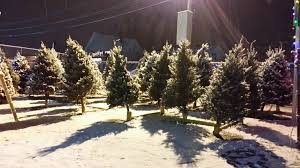 christmas trees real u0026 fresh cut east dedham builders supply