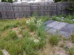 backyard restoration album on imgur