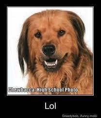 Chewbacca Memes - yoshiwa memedroid