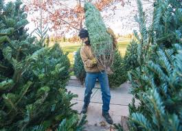 from turkey to tinsel tree farms get ready for christmas tree