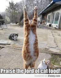 Praise The Lord Meme - praise the lord of cat food funny cats kittens