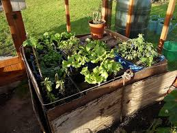 heating a greenhouse with compost and manure permaculture magazine