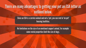 what is legitimate emotional support animal certification youtube