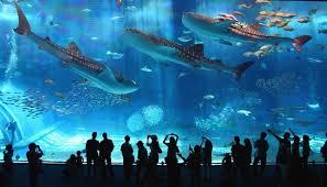 japanese aquarium the world s second largest aquarium tank kuroshio black current
