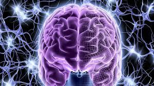 3d Head Anatomy Brain Anatomy Medical Head Skull Digital 3d Xray Psychedelic