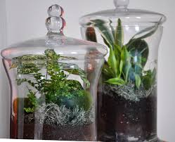 my own little garden within an apothecary jar apothecaries