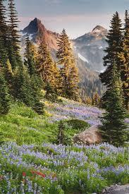 Solstice Park West Seattle Parks Amp Recreation by Best 25 Mount Rainier Ideas On Pinterest Rainier Mt Mt Rainier