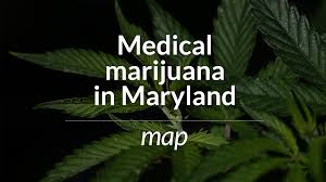 Weed Map Colorado by Maryland Prepares For The Medical Marijuana Business Baltimore Sun