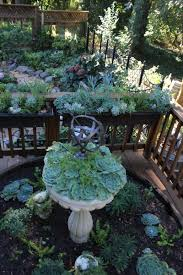 pam u0027s obsession with succulents in her california garden fine