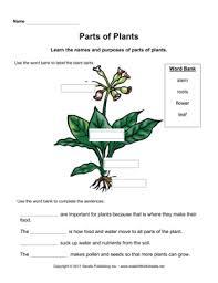 plant parts primary u2014 instant worksheets