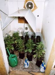 cheap grow lights for weed how to setup an indoor marijuana garden on a budget the weed blog