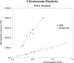 elasticity and structure of eukaryote chromosomes studied by