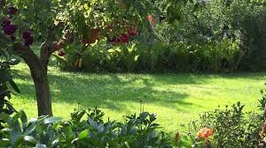 flowers and fruit gardener mowing grass between flowers and fruit trees in