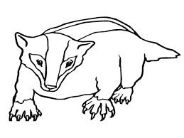 football printable coloring pages badger coloring page srp2013 under badger pinterest