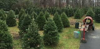 Washington Christmas Tree Farms - jug hill u2013 christmas trees washington crossing pa willard