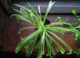 Best Plants For Bathroom Bathroom Plants 10 All Time Favorites Bob Vila
