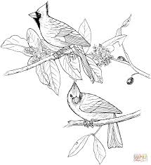 cardinal bird and flowering virginia state flower coloring page