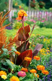 Tropical Plants For Garden - going tropical in the garden 10 easy steps your easy garden