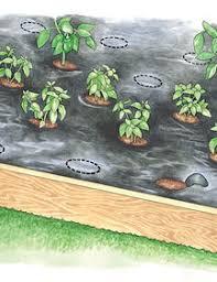 choosing the right mulch for vegetable gardens gardener u0027s supply