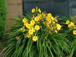 10 Best Perennials And Flowers by Best Flowering Perennials For Zone 6 Landscaping Gardening Ideas