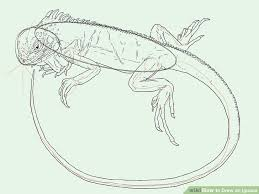 how to draw an iguana with pictures wikihow