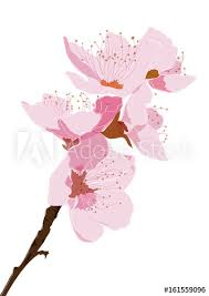 Cherry blossom branch vector Pink flower element in Japanese style