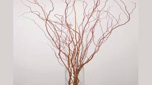 diy how to design curly willow and willow branches