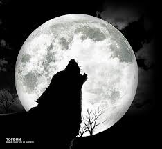 wolf howling at the moon wolf wolf howling and