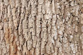 White Oak Tree Bark Charlotte Nc Hardwood Tree Identification Mark U0027s Firewoodmark U0027s