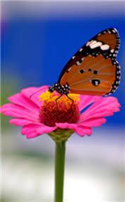 Flower Butterfly Tattoos 01 Butterflyonpinkflower Png