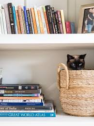 How To Make A Small Bookshelf Best 25 Cat Therapy Ideas On Pinterest Animal Rescue Stories