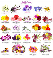 flowers names with pictures pdf flowers ideas
